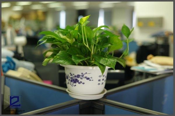 Trên bàn làm việc nên để gì? Chậu cây cảnh chính là gợi ý dành cho bạn.