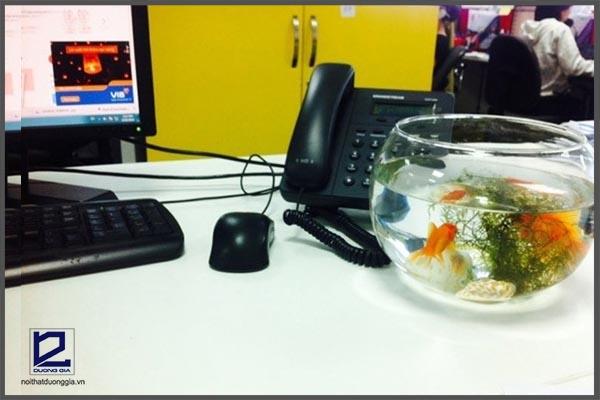Trên bàn làm việc nên để bể cá nhỏ.