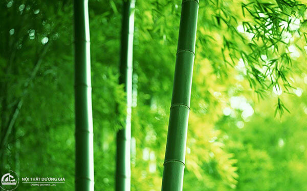 Ý nghĩa cây tre trong đời sống văn hóa người Việt