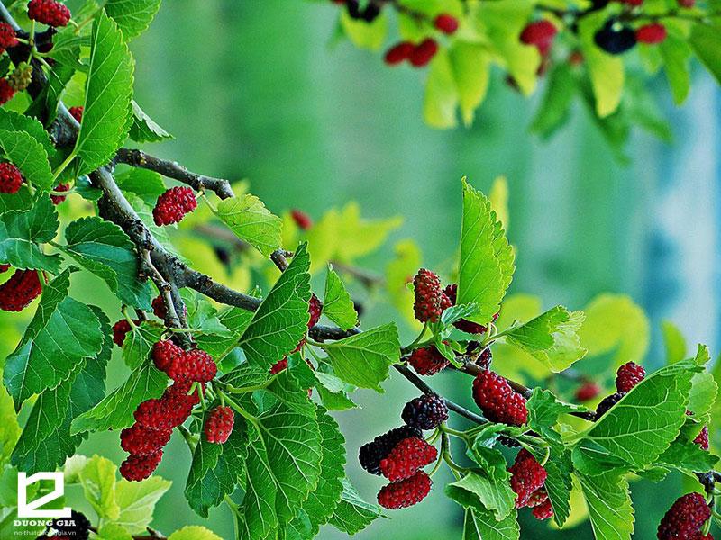 Các loại cây không nên trồng trước nhà để tránh xui xẻo, rắc rối