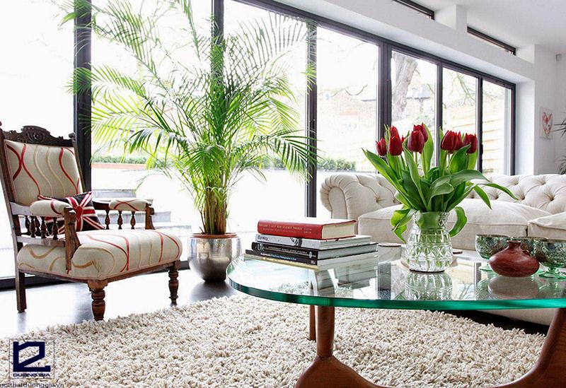 Cách bố trí cây cảnh trong phòng khách dựa vào nguồn sáng được cung cấp cho từng vị trí