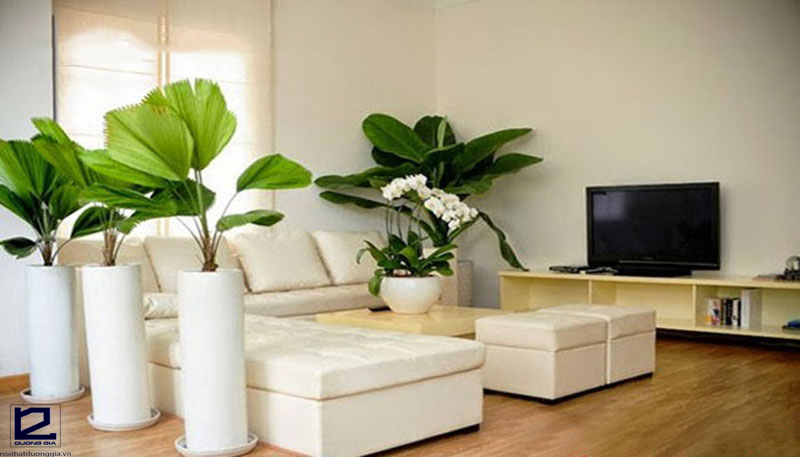 Hướng dẫn cách bố trí cây cảnh trong phòng khách đẹp và hợp phong thủy