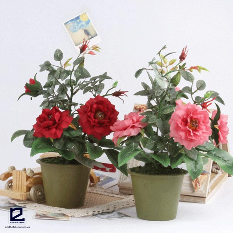 Cây phong thủy cho người tuổi Tý mệnh Thổ - cây hoa hồng