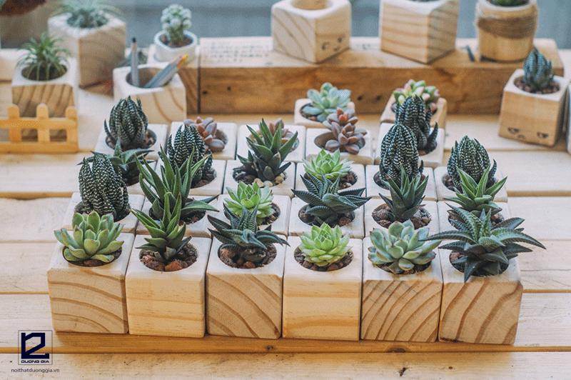 Có rất nhiều lựa chọn nếu bạn muốn trồng cây Xương rồng trước nhà