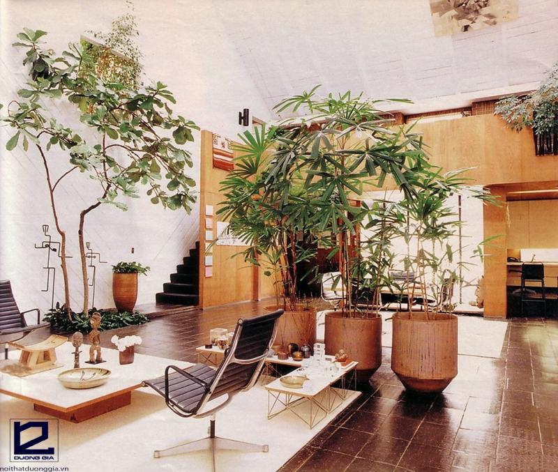 Một số lưu ý khi bố trí cây phong thủy trong phòng khách