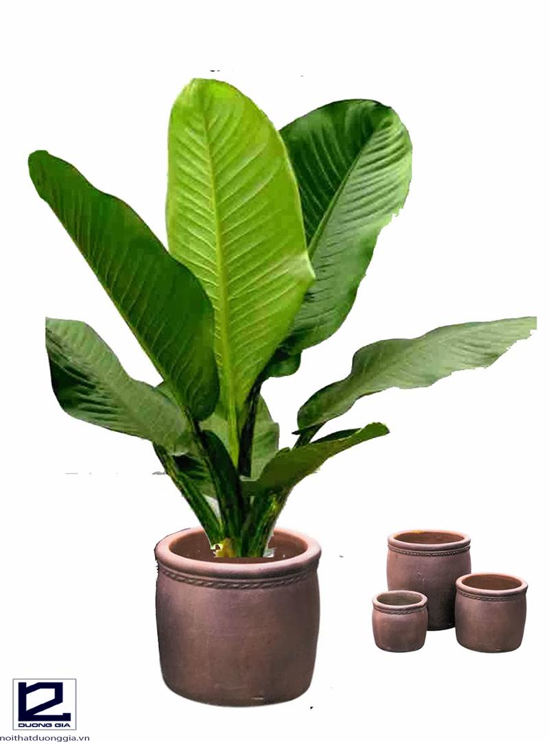 Nên trồng cây Đại phú gia trong giếng trời làm cây chủ đạo