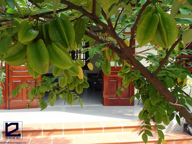 Nên trồng cây khế lấy bóng mát trước nhà.