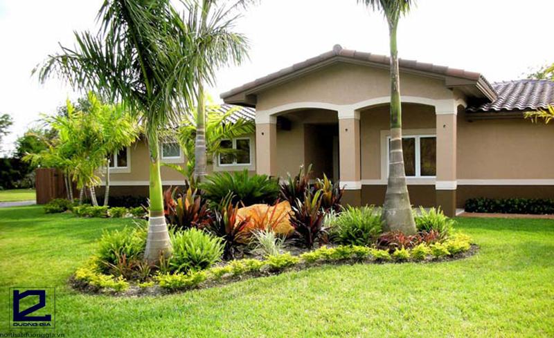Nên trồng cây gì lấy bóng mát trước nhà? - Cây cau là một trong những lựa chọn phù hợp nhất.