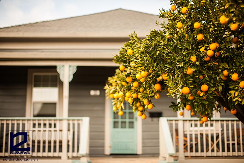 Nên trồng cây gì trước cổng nhà để đem tài vượng tới gia đình?