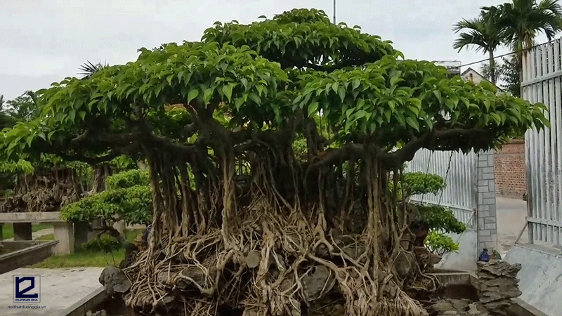 Trồng cây cảnh trước nhà không nên chọn cây gì?