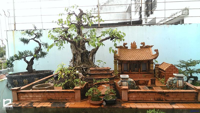 Trong phong thủy có nên trồng cây Đa trước nhà?