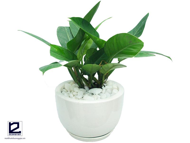 Tuổi Ất Sửu nên trồng cây gì trong nhà?