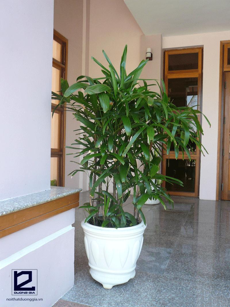 Tuổi Tân Dậu nên trồng cây gì?
