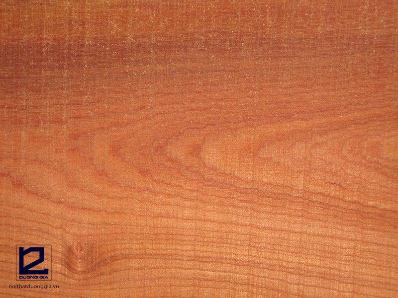 Các loại gỗ tự nhiên dùng trong nội thất - gỗ Xoan đào