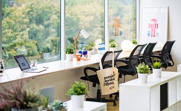 Tại sao cây bonsai để bàn làm việc luôn được nhiều người ưa chuộng?